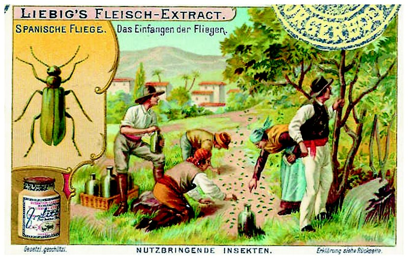 collecting spanish flies trade card