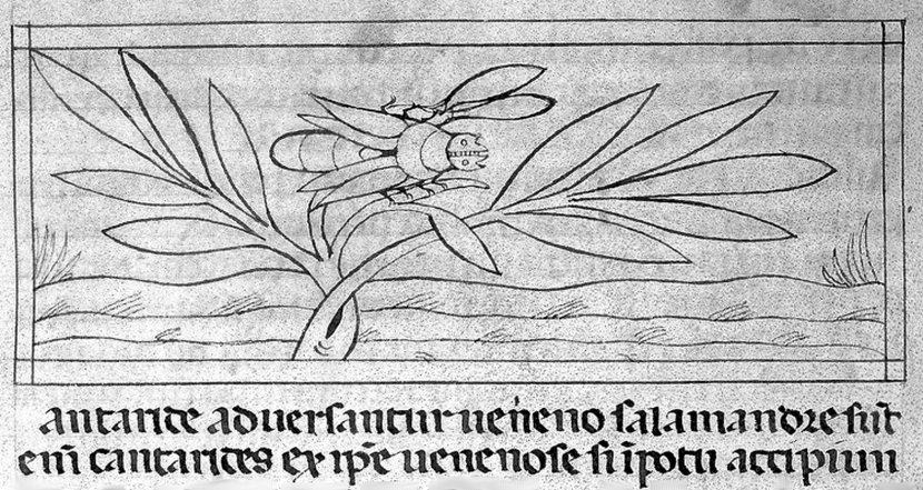 the original spanish fly